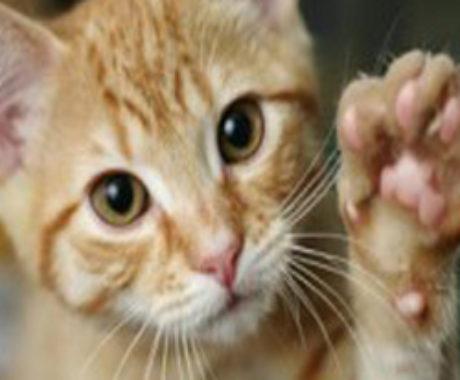 Mi gatito Hachi