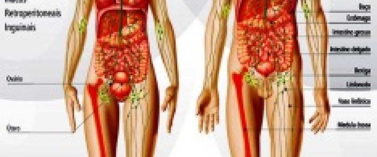 El sistema linfático: ese gran desconocido. (Artur Ferrer Escriche)